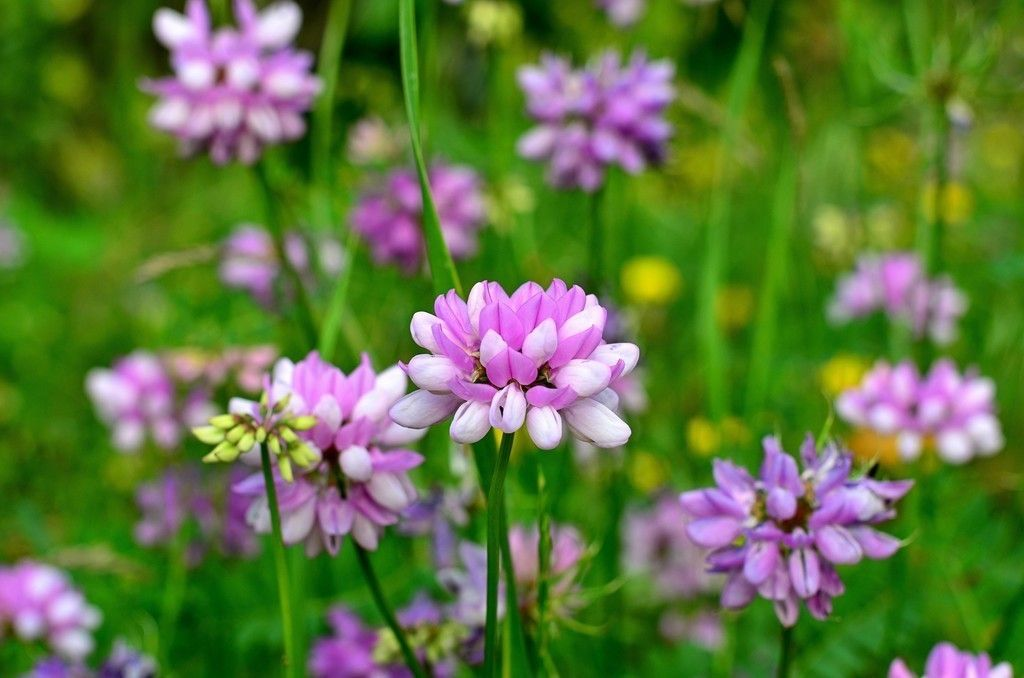 Wild flowers meadow pink flowers plants wallpaper flowers desktop wallpaper wild flowers meadow pink flowers plants hd image picture background a6d929 mightylinksfo Image collections