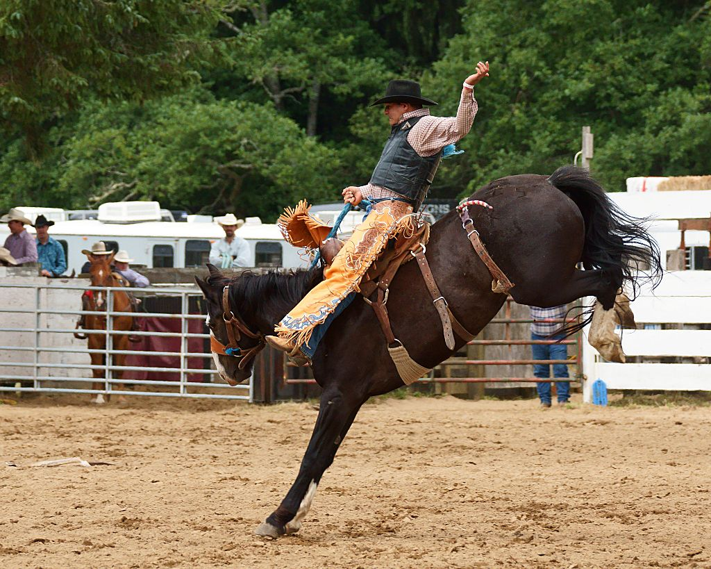 rodeo horses ile ilgili görsel sonucu