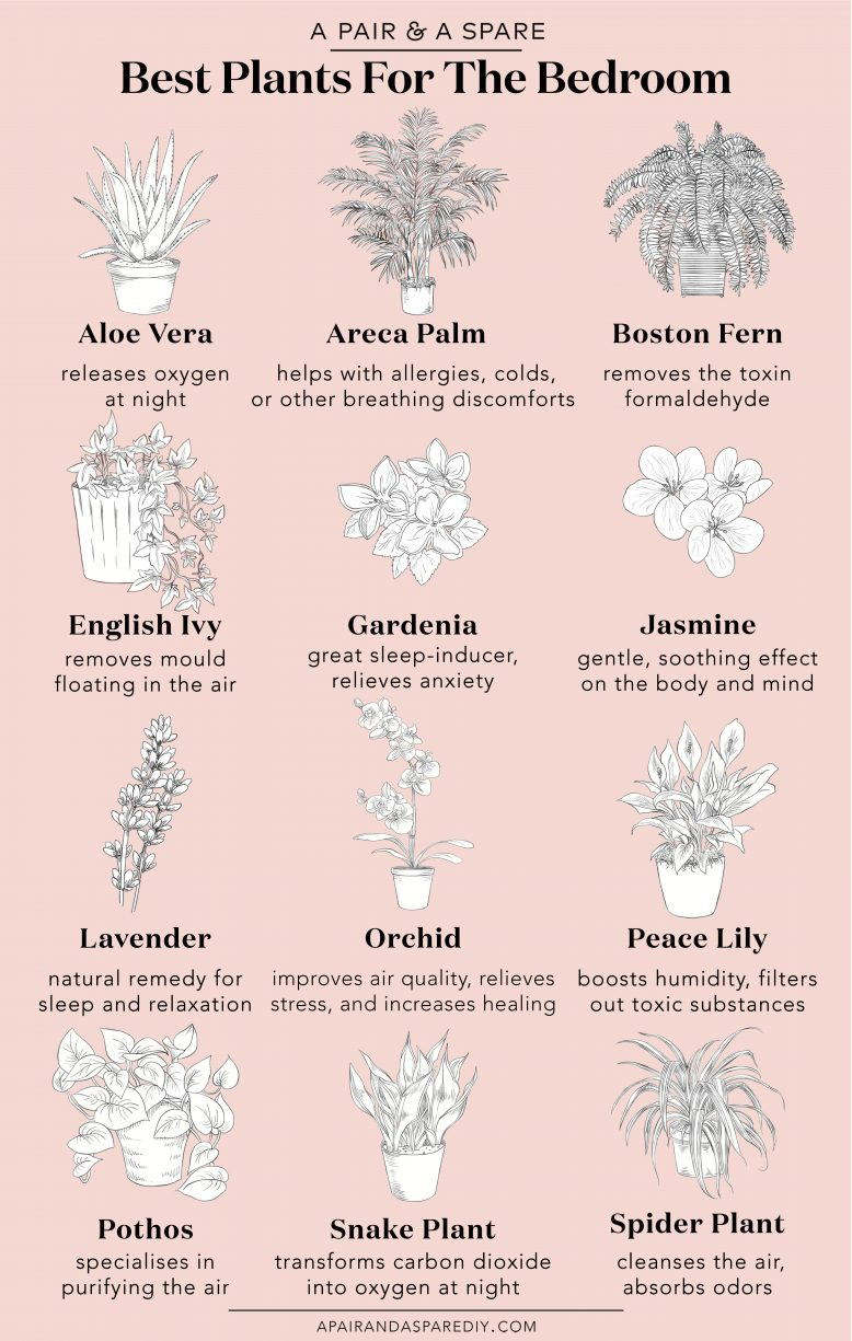 These are the vegetation it is best to have in your bed room Collective Gen. # the #this #gen