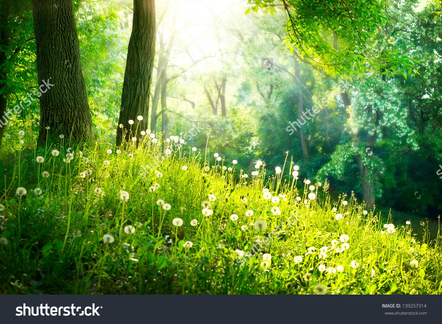 Spring Nature Backgrounds Photo About Green Grass And Trees