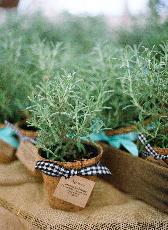 Rosemary Plant In A Coco Pot For A Wedding Favor. Perfect Idea For A Garden  Wedding! State Of GA Botanical Garden.