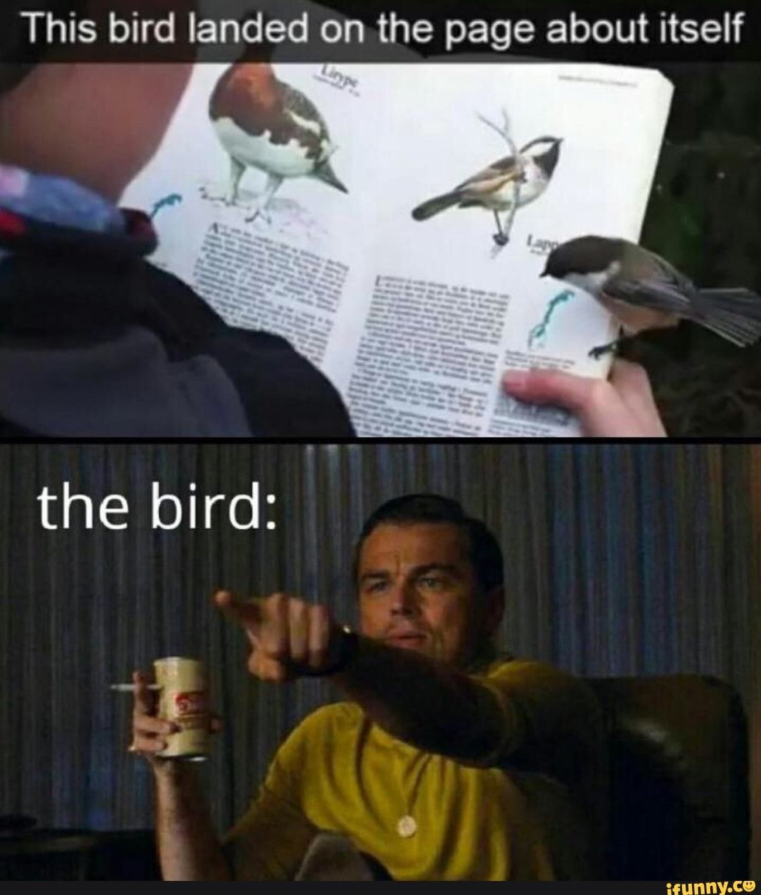This bird landed on. the page about itself - )
