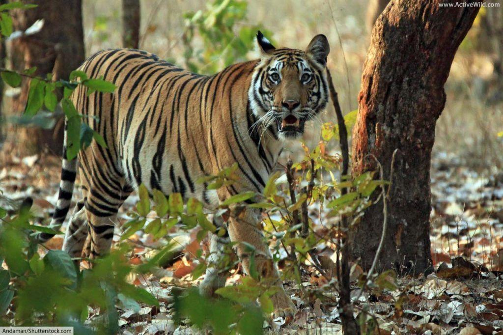 18+ Pictures of rainforest animals ideas