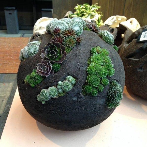 12 Zimmerpflanzen-Display für Ihr Zuhause #bonsaiplants