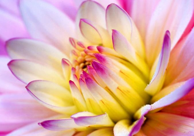 Pink yellow flower images flower decoration ideas pink and yellow flower image collections flower decoration ideas pink and yellow flower gallery flower decoration mightylinksfo Image collections