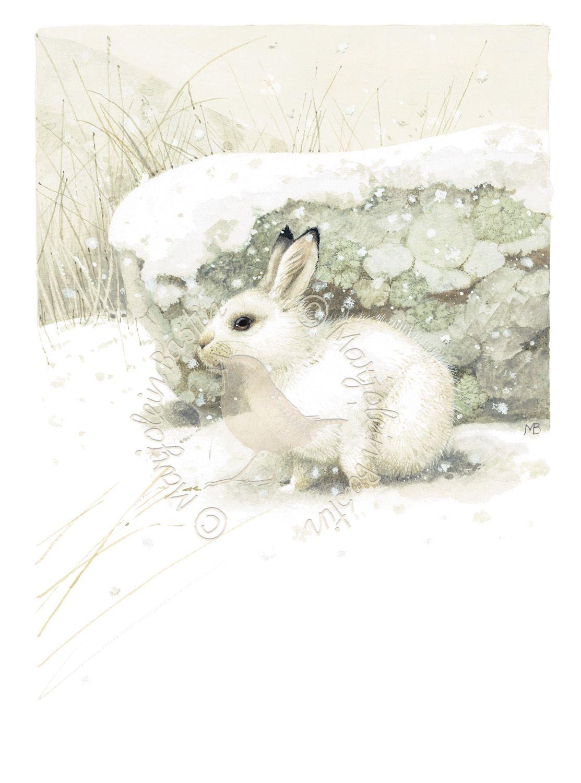 hiding in plain sight winter rabbit snow animals in. Black Bedroom Furniture Sets. Home Design Ideas