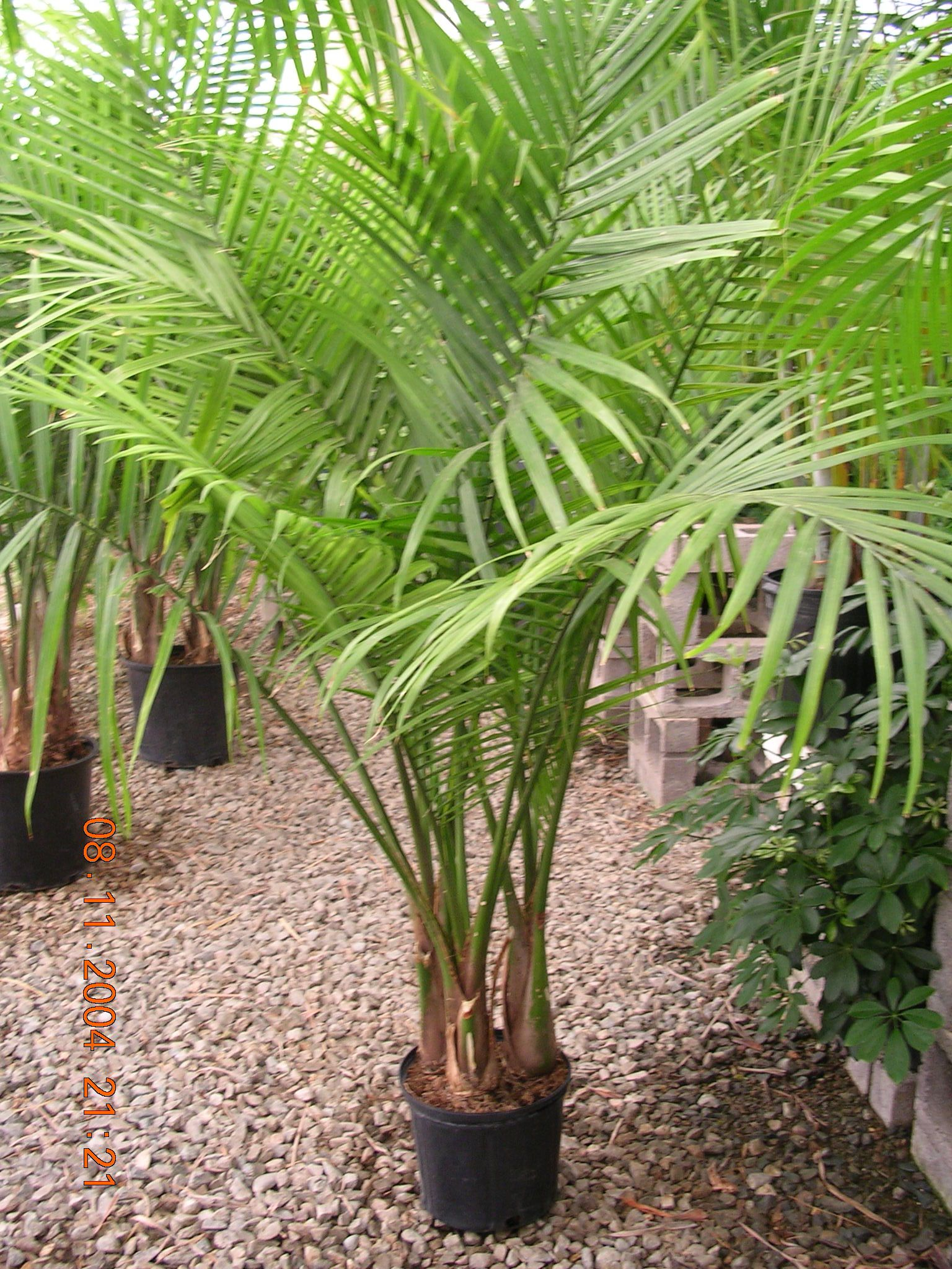 Tropical Foliage Indoor Plants Indoor Tropical Plants Google Search Garden Makeover