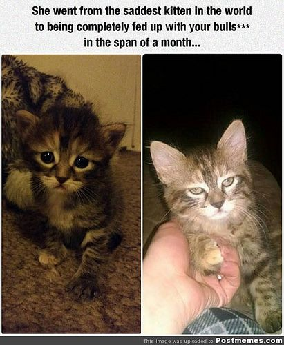 In Just The Span Of A Month - http://dailyfunnypets.com/pictures/cats-pics/in-just-the-span-of-a-month/ - In Just The Span Of A Month  Image by Postmemes.com postmemes.com/in-just-the-span-of-a-month/ - (month), just, Span