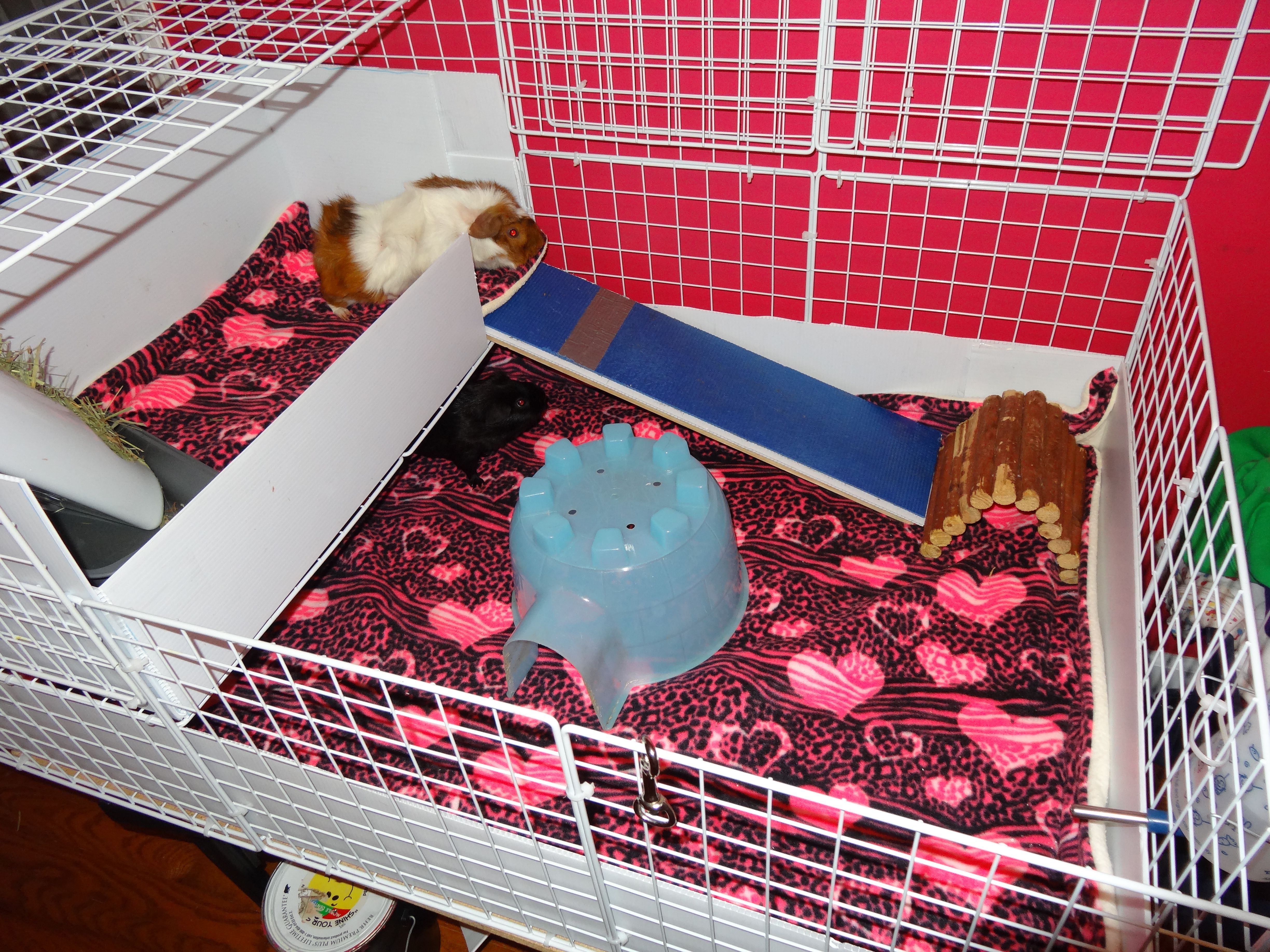 Our cage has a new fleece lining and I lowered the top loft so I the piggies did not have such a steep climb up the ramp.