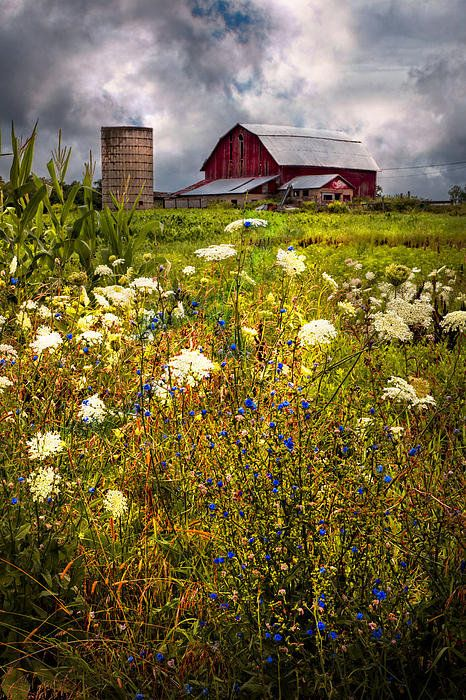 Red Barns In The Wildflowers Art Print Landscape Rugs