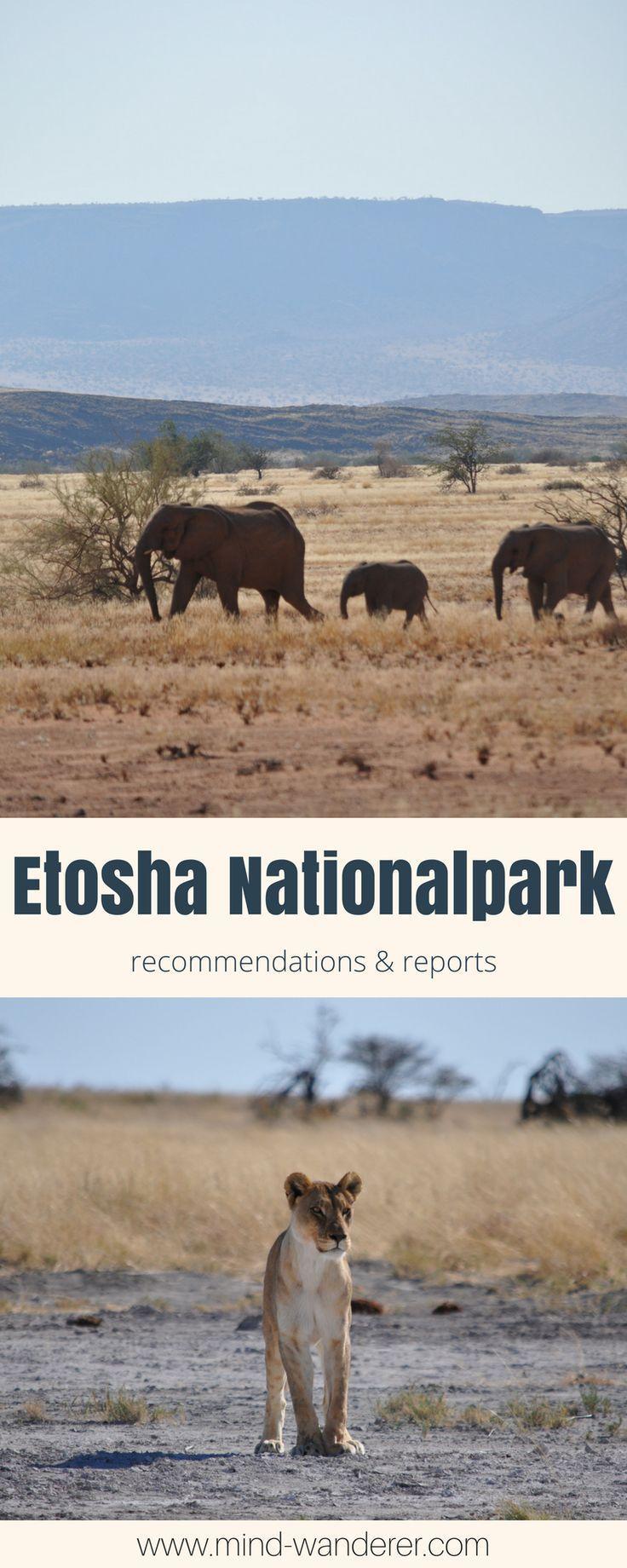 Auf Safari im Etosha Nationalpark   AFRIKA   AFRICA   Reisen