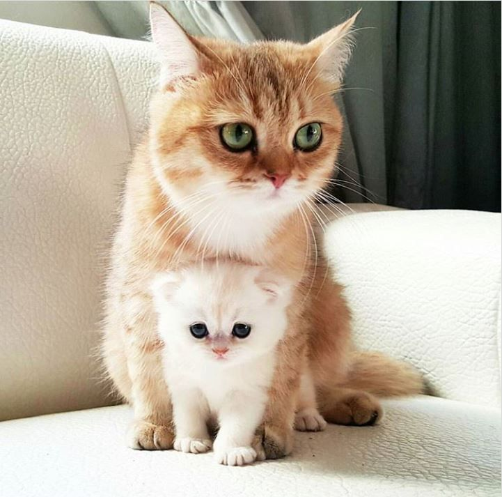 A Kitty with a Cat