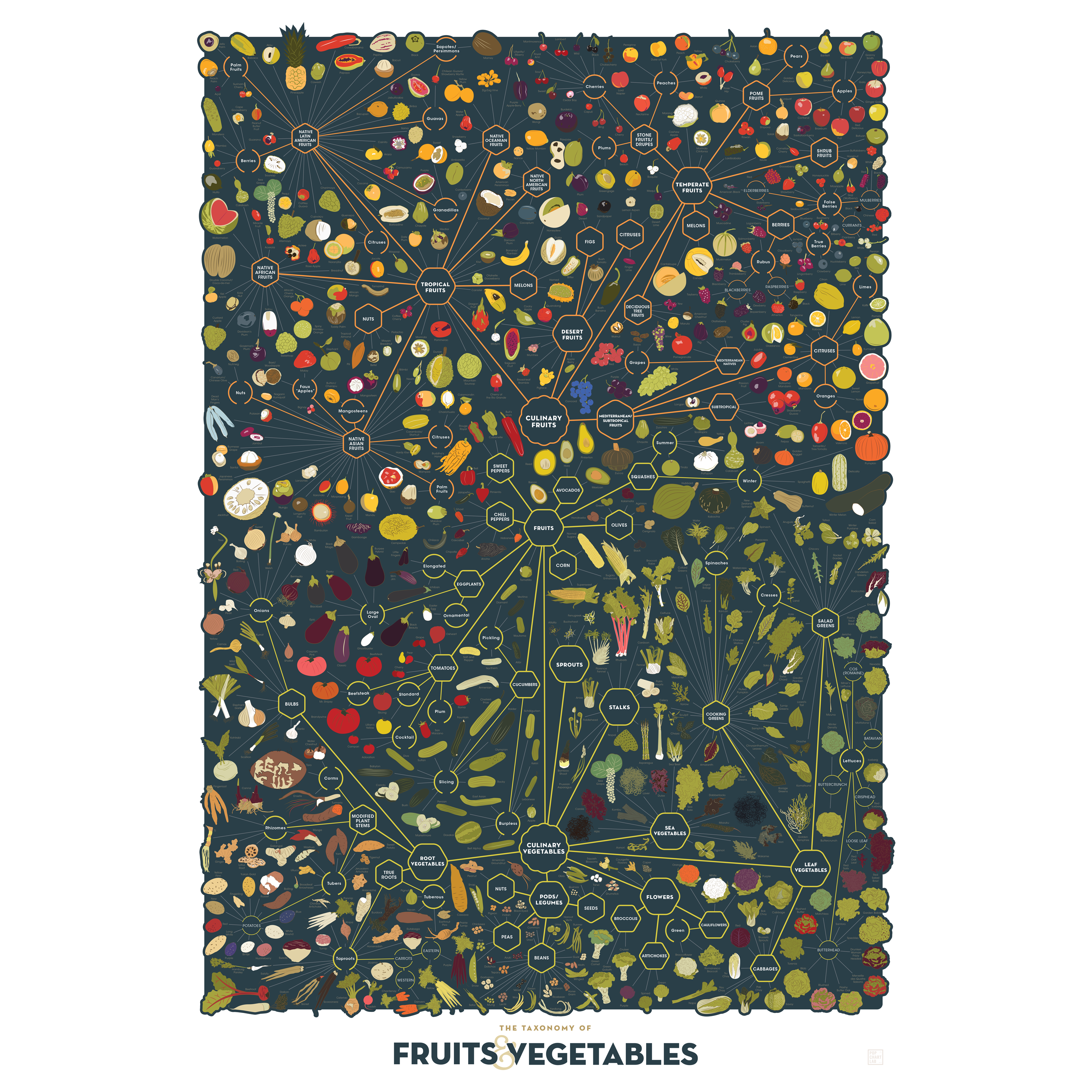 The Taxonomy Of Fruits Amp Vegetables Poster