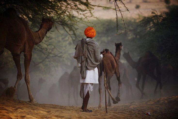 Bilder des Tages: Kamel zu verkaufen - Bilder des Tages der Woche | STERN.DE