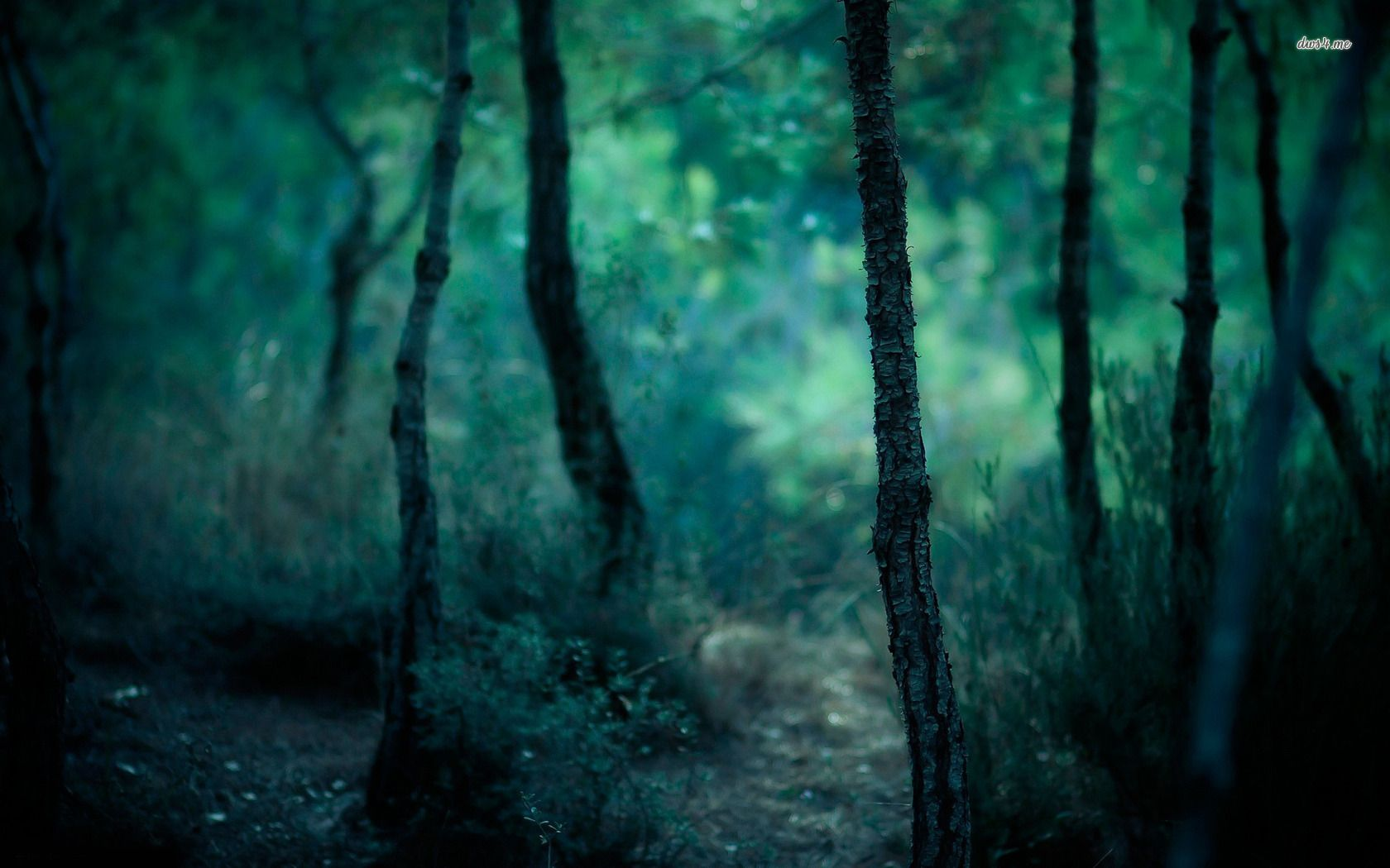 Dark Forest Hd Wallpaper Dark Forest Wallpaper Forest Wallpapers Forest Pictures