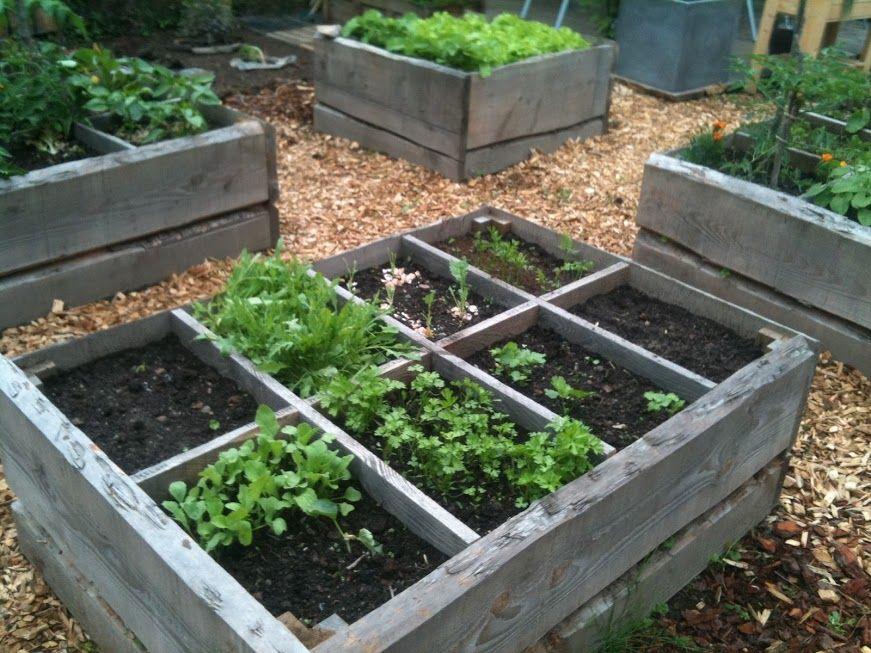 potager en carré Carré potager, Jardinage, Jardins