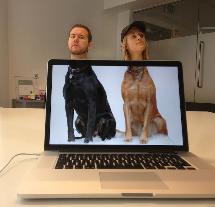 Funny Photos of Coworkers Aligned with Animal Bodies #funnyphotos