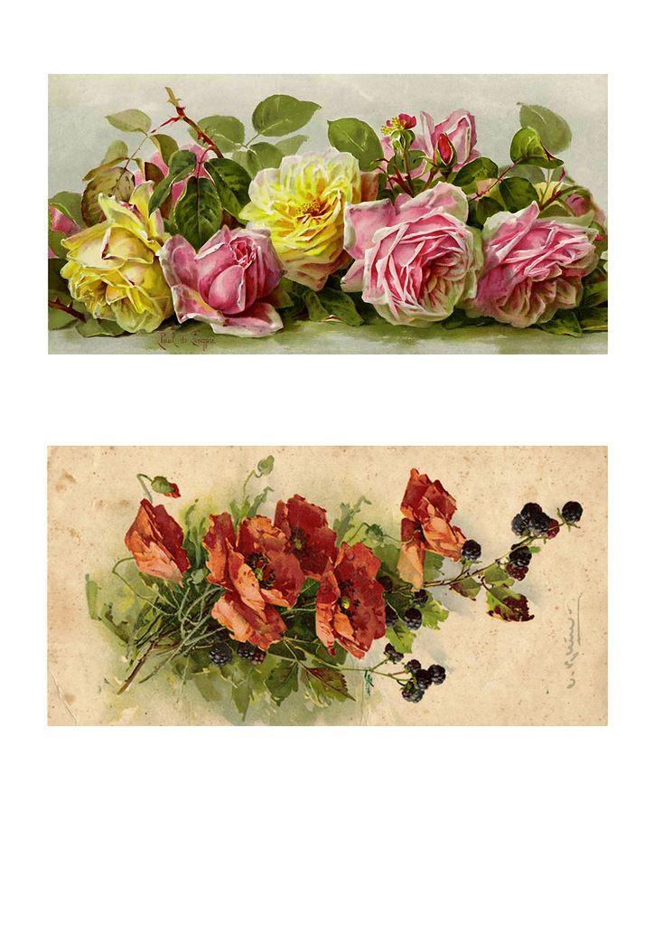 п3.jpg — Просмотр документов   Картинки, Цветы