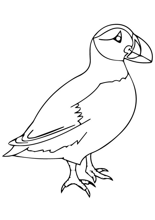 Top 10 Puffin Coloring Pages For Toddlers Zoo Coloring Pages
