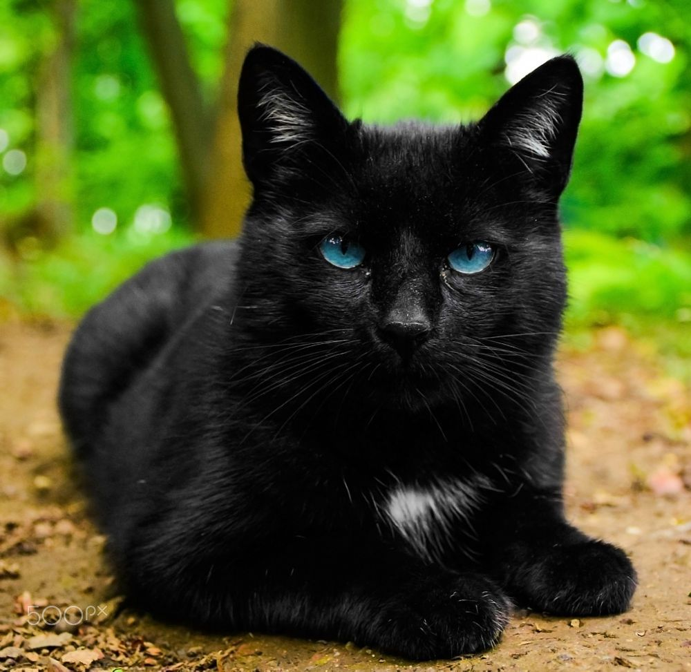 Black Cat With Blue Eyes Cat With Blue Eyes Cats Cats And Kittens