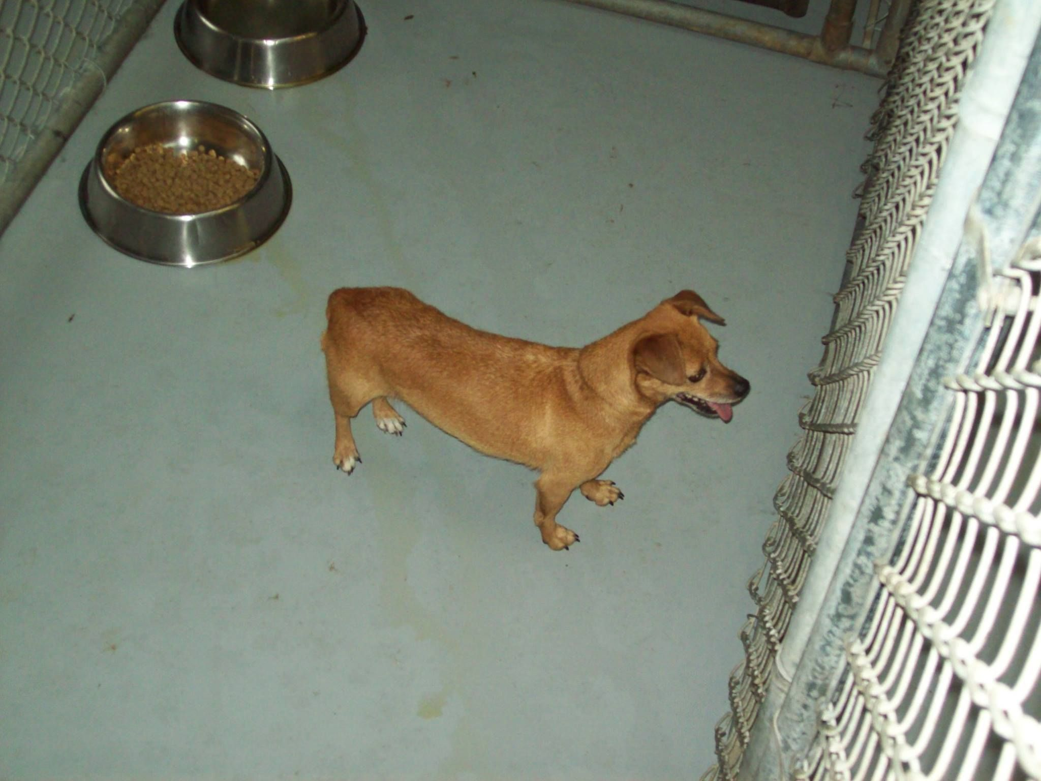 Lee County Va Found Female Dog At Lee County Animal Shelter This