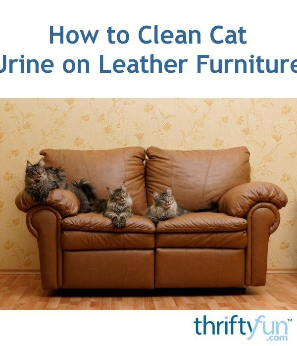 Surprising How To Clean Cat Urine On Leather Furniture Dogs Stuff Short Links Chair Design For Home Short Linksinfo