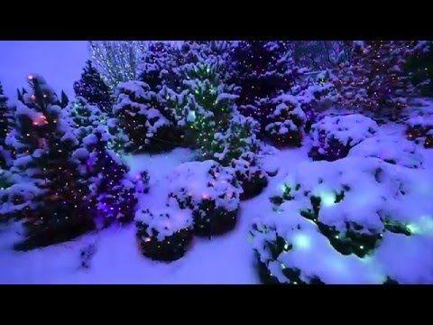 Blossoms of Light | Denver Botanic Gardens (With images ...