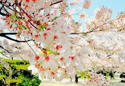Blossums Of Red Pixdaus Urban Garden Beautiful Flowers Blossom