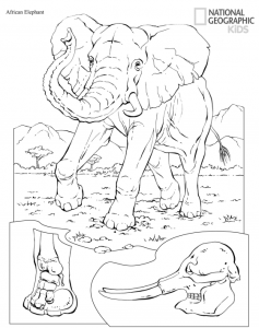 free printable animals coloring pages from national geographic kids