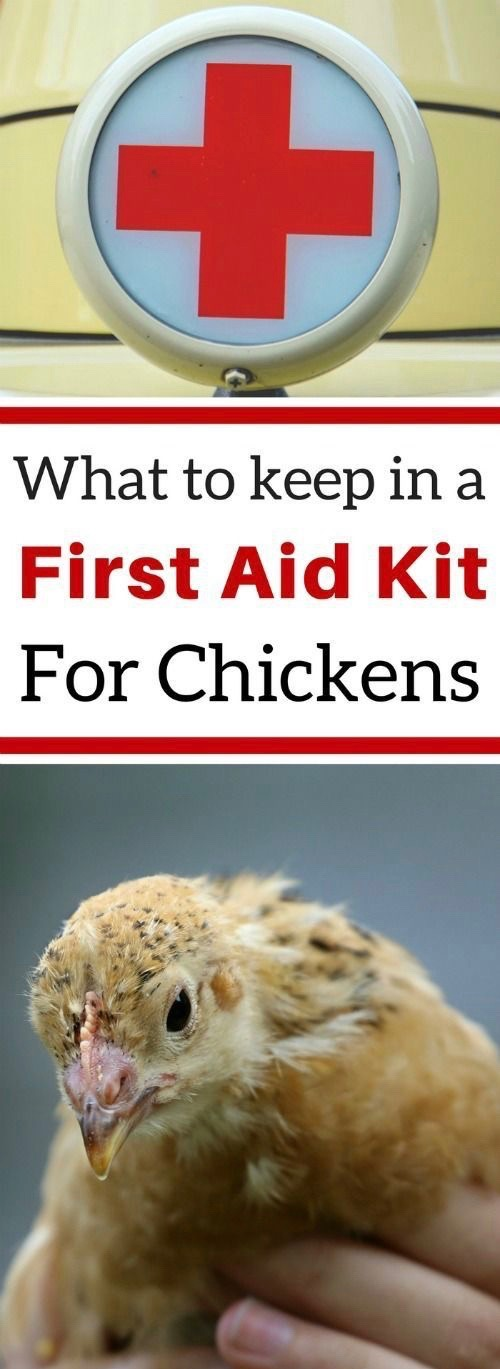 Chicken First Aid Kit Chickens backyard, Chicken diy