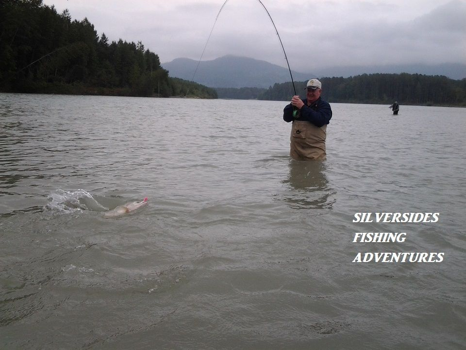 Pink Salmon Fly Fishing In Vancouver British Columbia With Silversides Fishing Adventures Your Premier Guided Fis Fishing Adventure Fly Fishing Fishing Guide