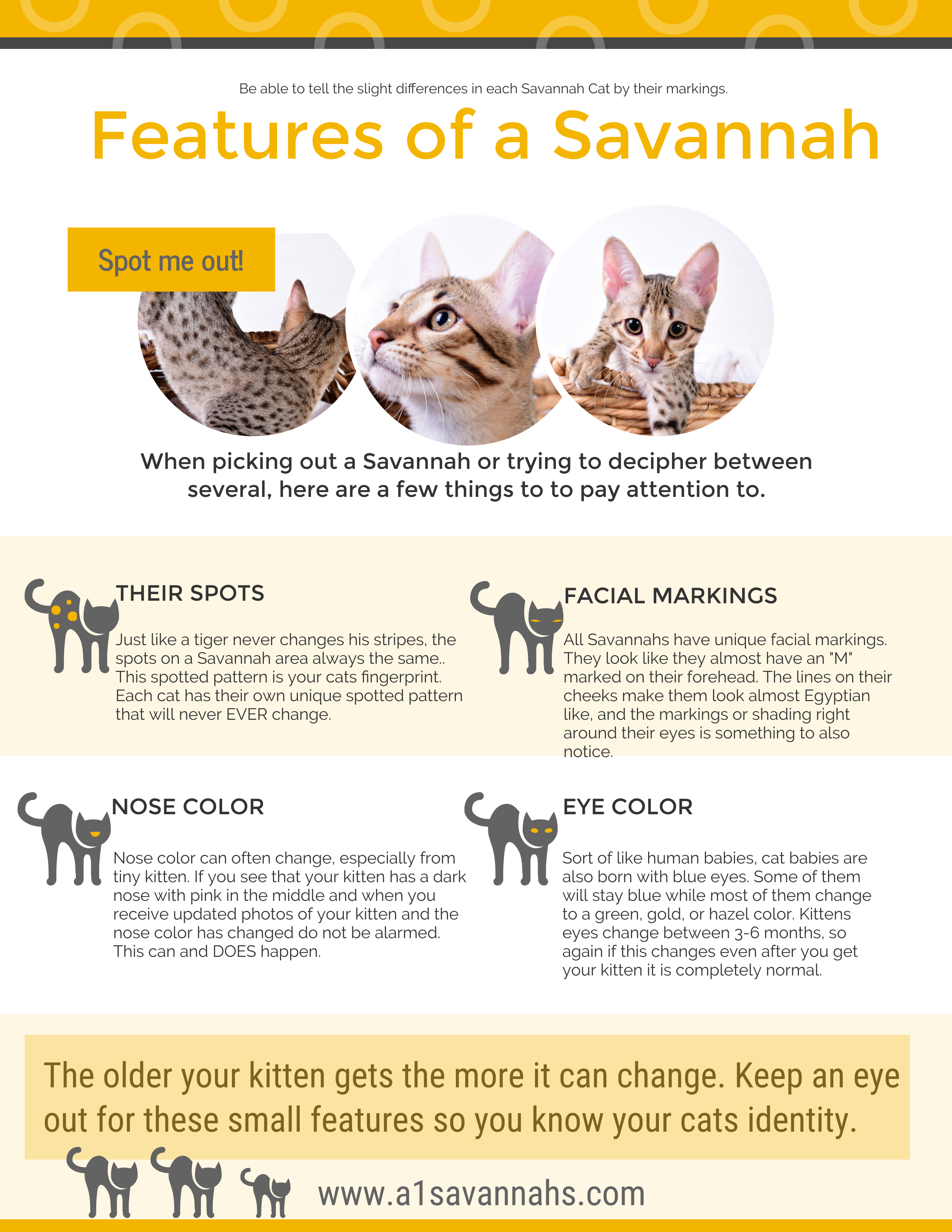 Let us help you identify your Savannah Cat! Savannah cat