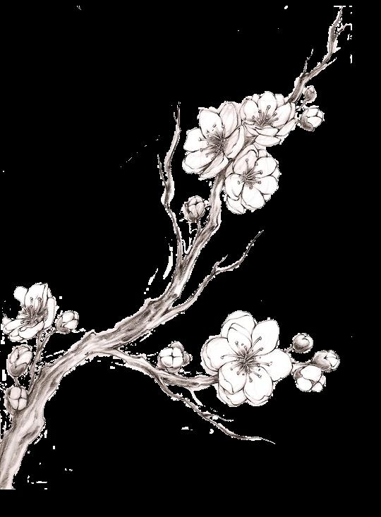 Resultat De Recherche D Images Pour Cherry Blossom Drawing Flor De Cerezo Dibujo Cerezos Dibujo Arbol De Cerezo Dibujo