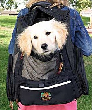 http://www.petcarrierverdict.com/best-dog-backpack-carrier/ Dog ...