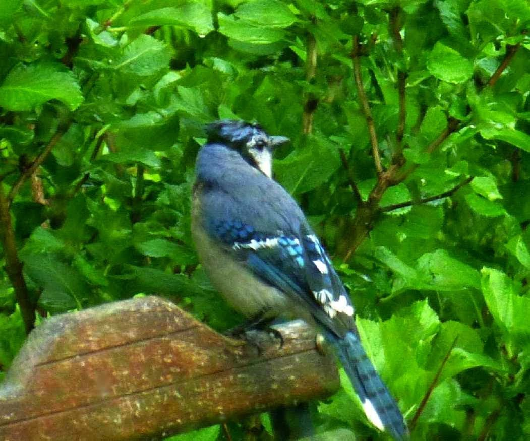 Birds of western north carolina on pinterest 34 pins in