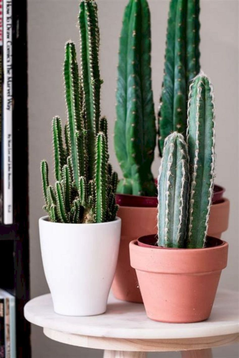 23 Gorgeous Indoor Cactus Plants Ideas to Beautify Your Home #cactusplant