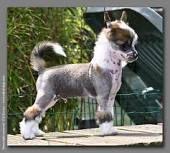 Pin By Robbin Hurt On Go Get It Go Get It Boy Chinese Crested Dog Chinese Crested Chinese Crested Puppy