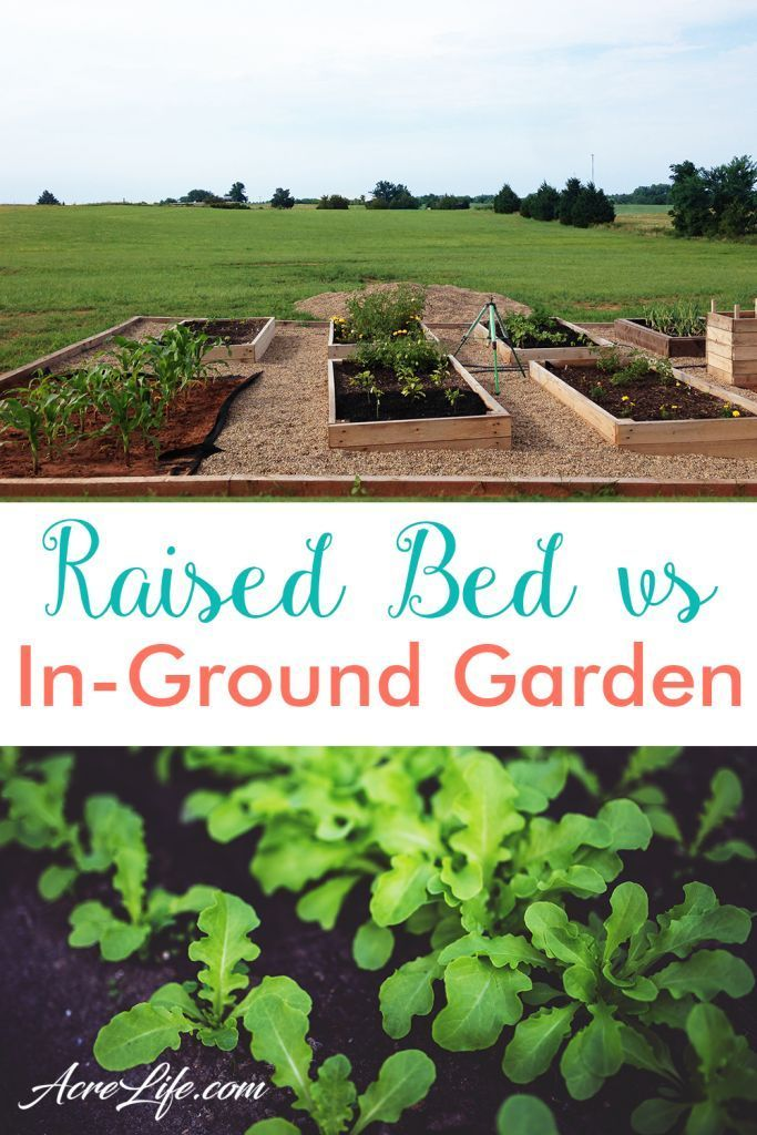 I love the pros and cons list for choosing a raised bed or in ground garden. It really helped... I love the pros and cons list for choosing a raised bed or in ground garden. It really helped me decide which garden type will work best for me.,