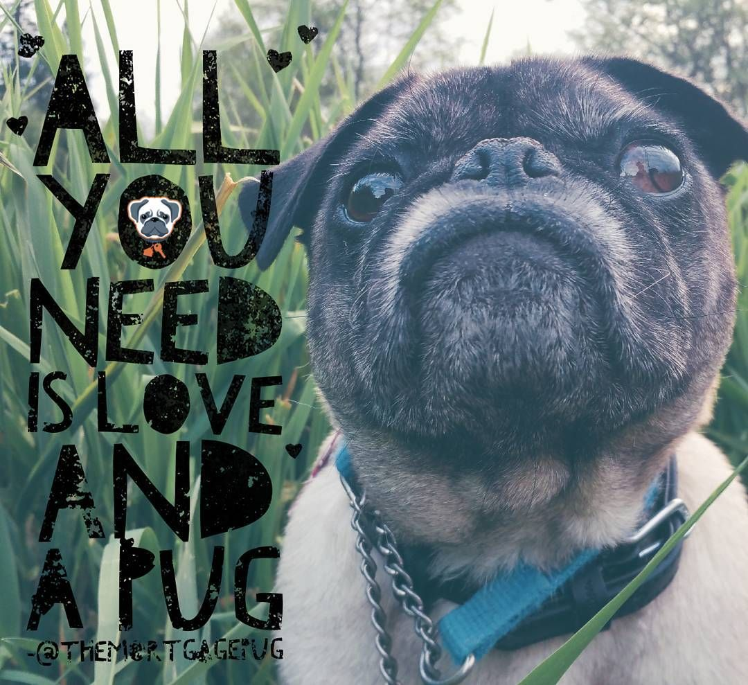It's TRUE! All you need is #LOVE & a #PUG ... of course it helps when he can save you a few bucks a some stress while he's at it!
