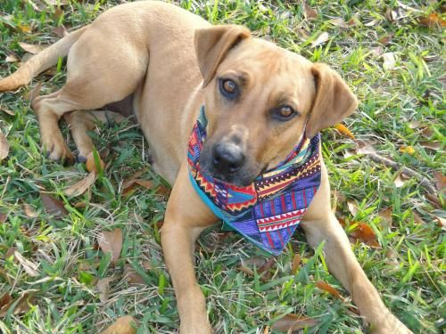 Adopt Mae On Dogs Animal Rescue Animals