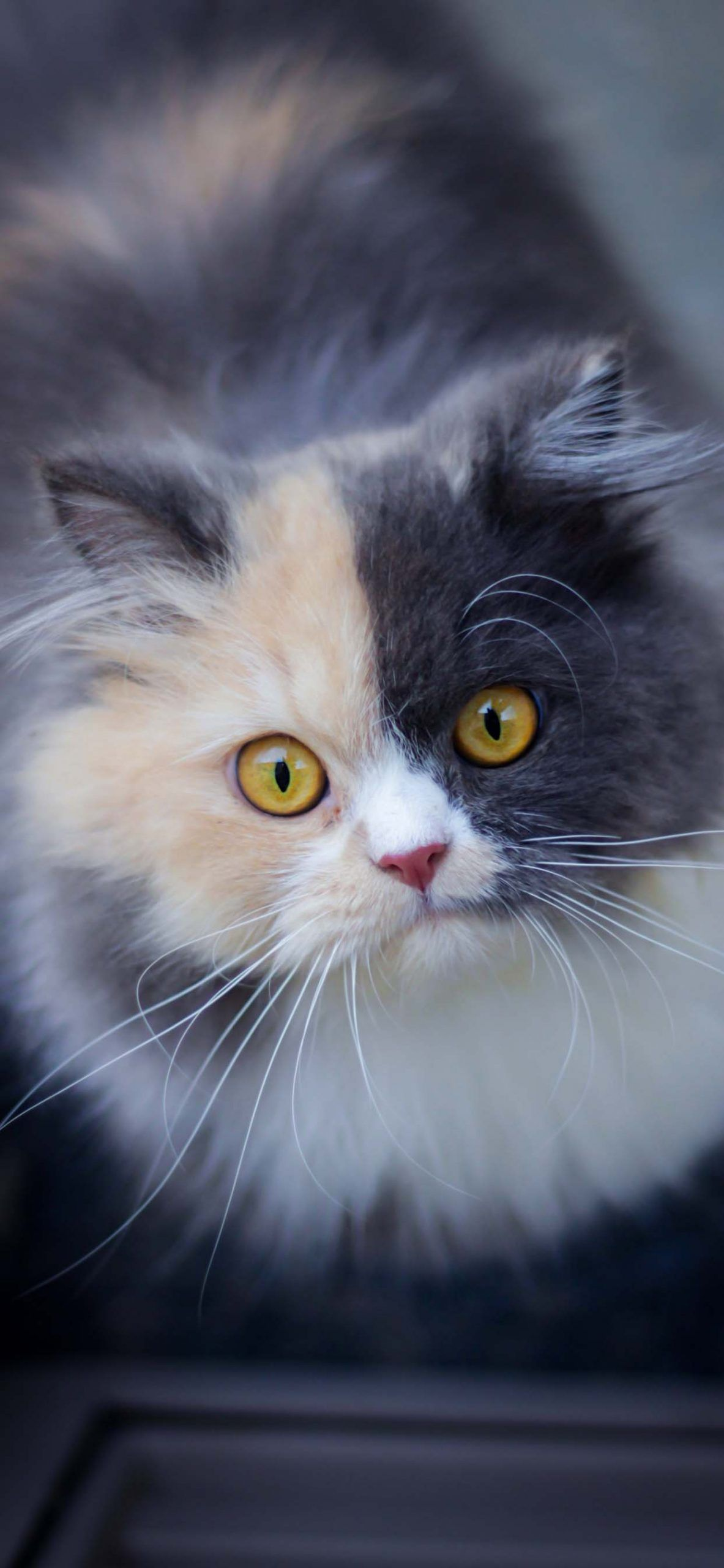 Cute cat wallpapers energize your phones screen in