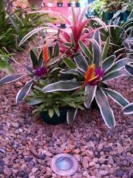 Resultado de imagen para jardines con piedras y bromelias for Jardines de poni