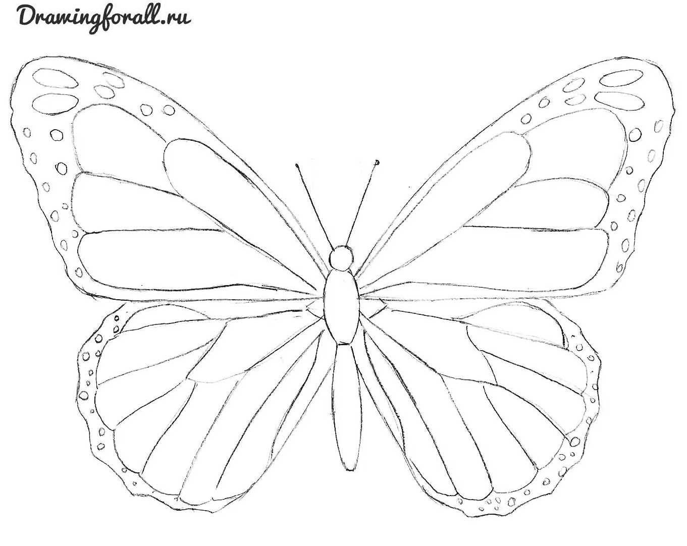 How To Draw A Butterfly Schmetterling Malen 14