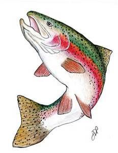 Rainbow Trout Drawings Bing Images With Images Trout Art