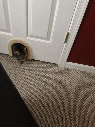 The Cat Hole Pet Door Is Designed For Interior Use To Allow A