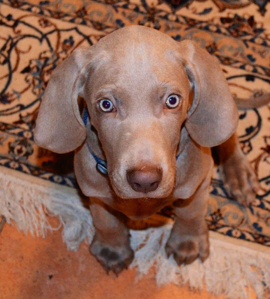My Best friend/sisters cute Dog as a puppy follower her