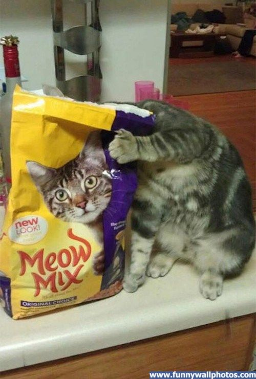 meow mix....one of my favorite brands!