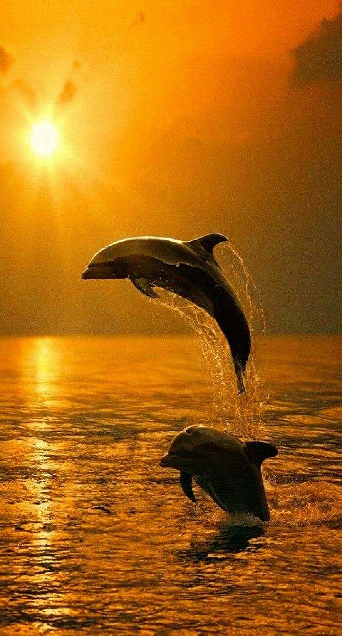 Photo of Delfine in der Abendsonne
