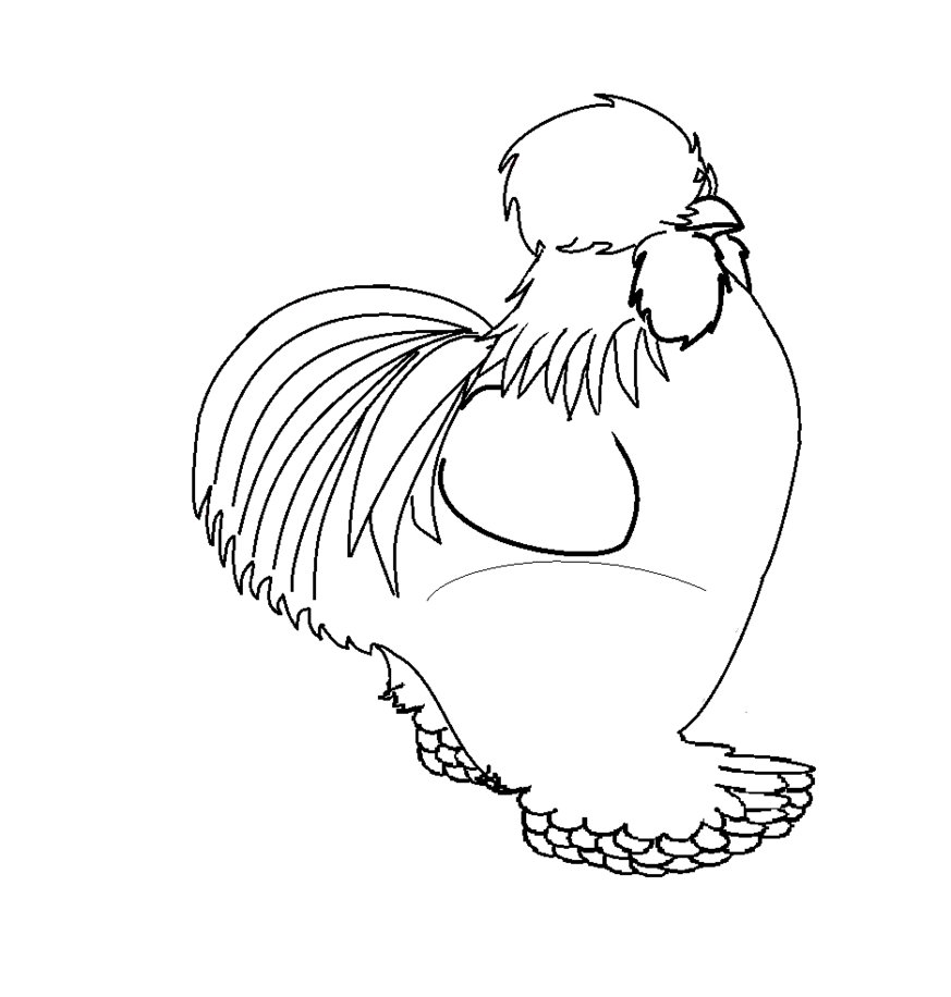 Silkie Chicken Coloring Page Coloring Chicken Coloring Pages Chicken Coloring Farm Animal Coloring Pages