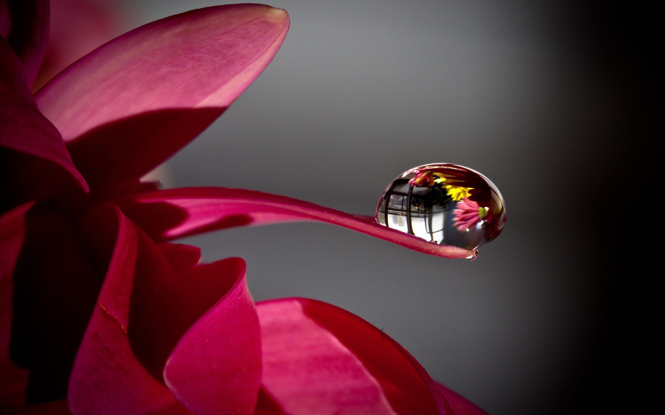 Wallpapers For Wallpaper Hd Flowers Drops Water Drop
